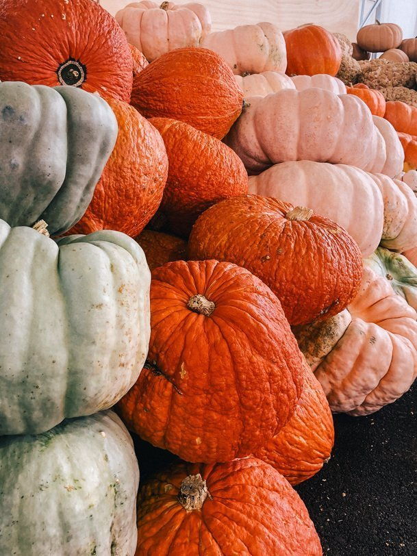 Pumpkins at Hershberger Farms in Ohio's Amish Country