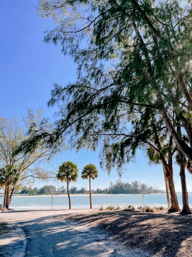 Wide bike path ending on Coquina Beach surrounded by pine trees on the right and palm trees straight ahead